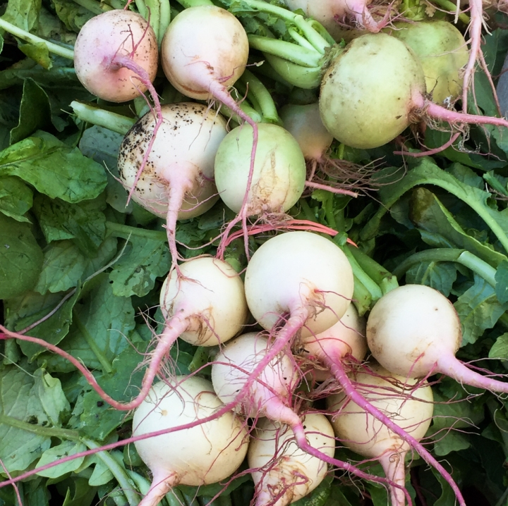 watermelon-radishes-2573