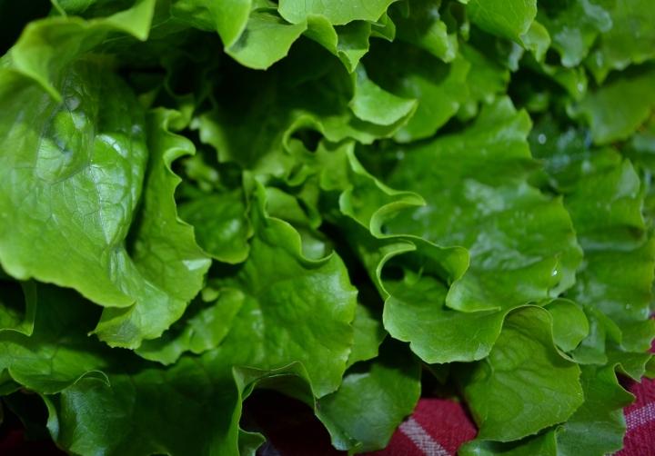 worden-farm-lettuce