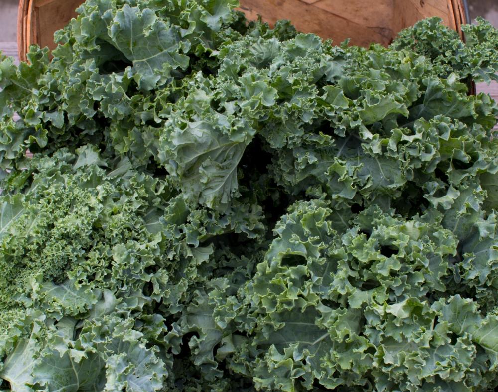 worden-farm-csa-crops-3901