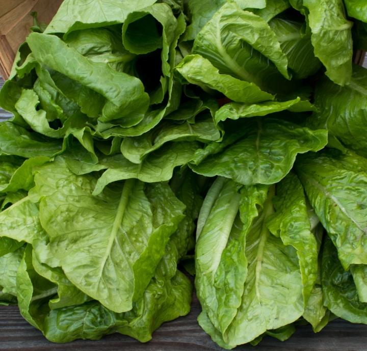 worden-farm-csa-crops-3986