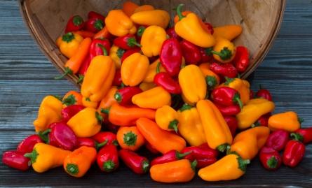 worden-farm-csa-crops-4011