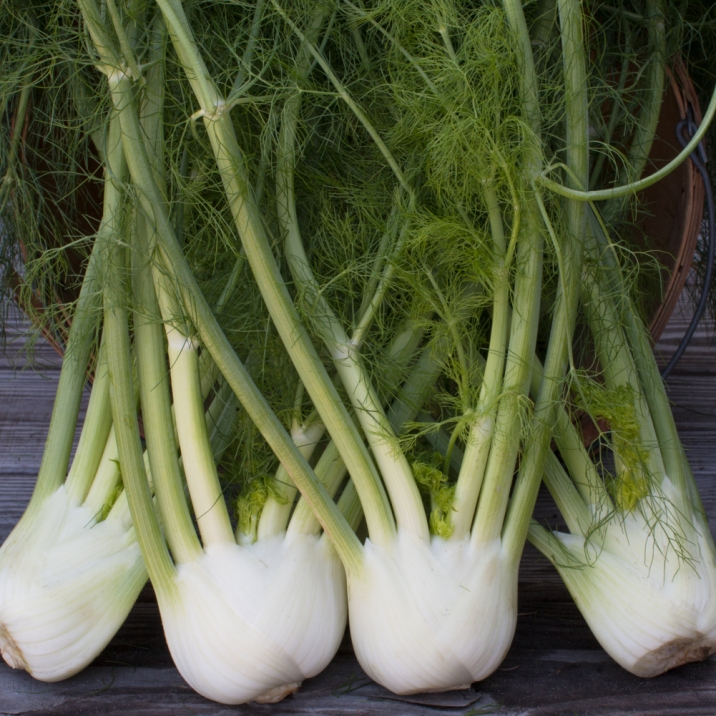 worden-farm-csa-crops-4198