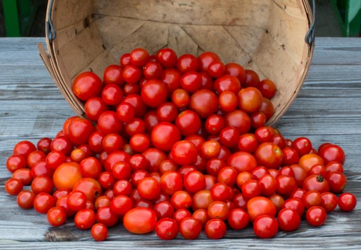 worden-farm-csa-crops-4228