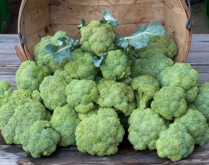 worden-farm-csa-crops-4274