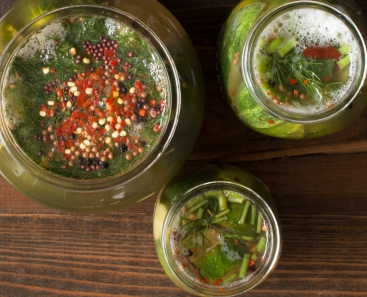Active lacto-fermentation of cucumbers lr-8266-2