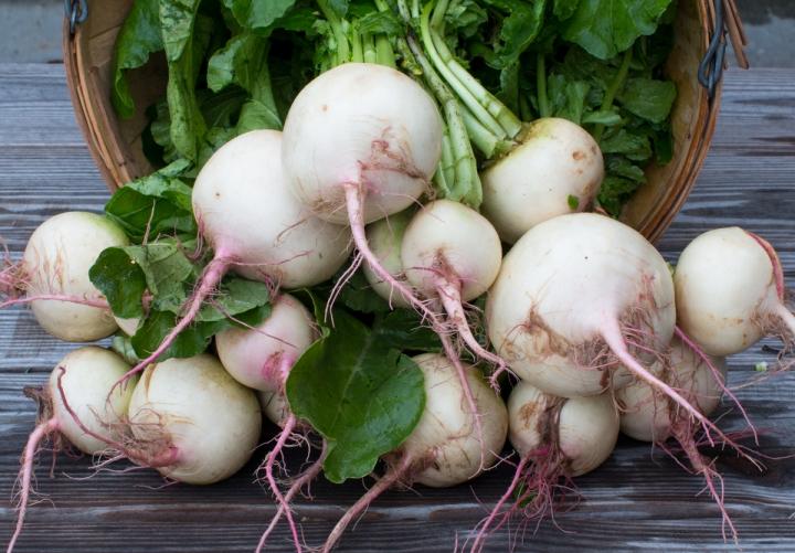 Worden Farm CSA crops-3932