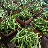 Spring Harvest News